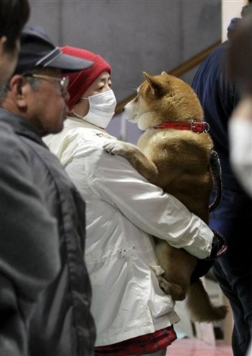 Japan_earthquake_dog_radiation_2