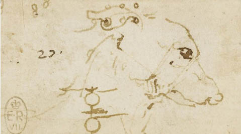 Head_of_dog_leonardo_da_vinci