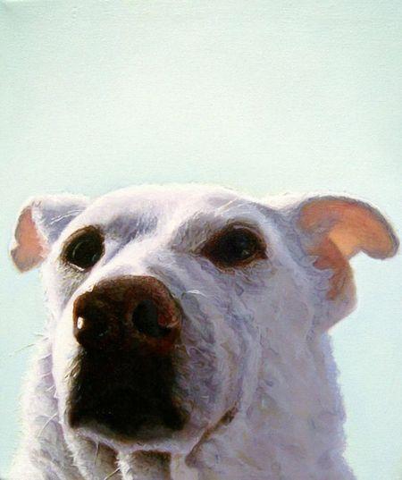 James_ruby_dog_sheba