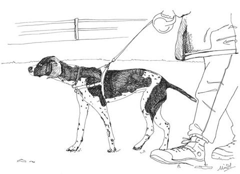 Minnie_teckman_dog_walk_6