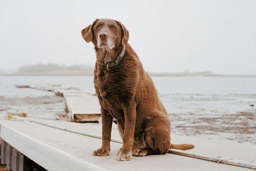 Charlotte_dumas_retrieved_dog_moxie