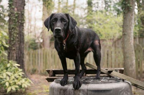 Charlotte_dumas_retrieved_9_11_dogs_red