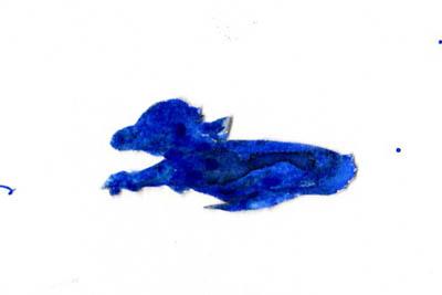 Blue_darby