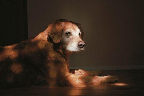 Charlotte_dumas_retrieved_9_11_dog_orion