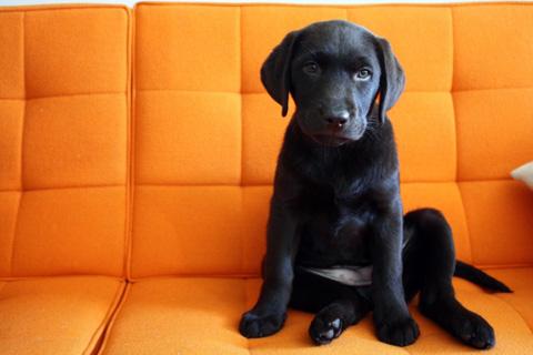 Pets_on_furniture_modernica
