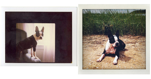 Jesse_freidin_dog_photographer_2