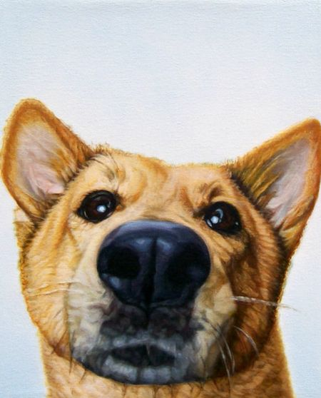 James_ruby_dog_lucky
