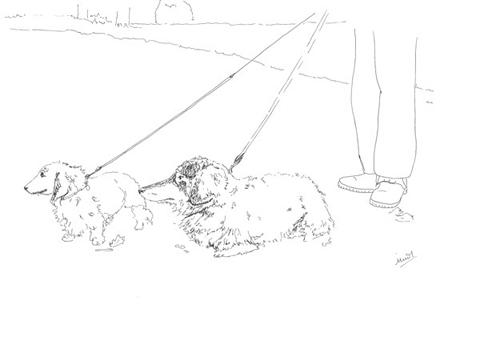 Minnie_teckman_dog_walk_2