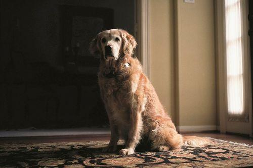 Charlotte_dumas_retrieved_9_11_dogs_bretane
