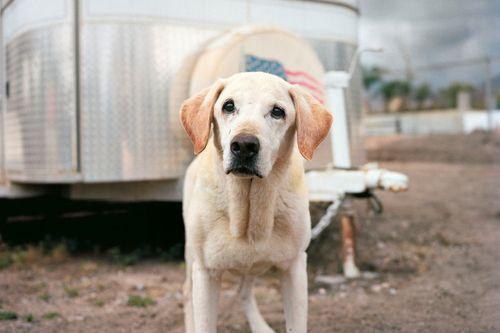 Charlotte_dumas_retrieved_9_11_dog_Guinness