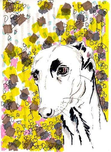 Jo_chambers_dog_portraits_4