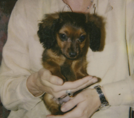 Darby_puppy_in_my_hands_post