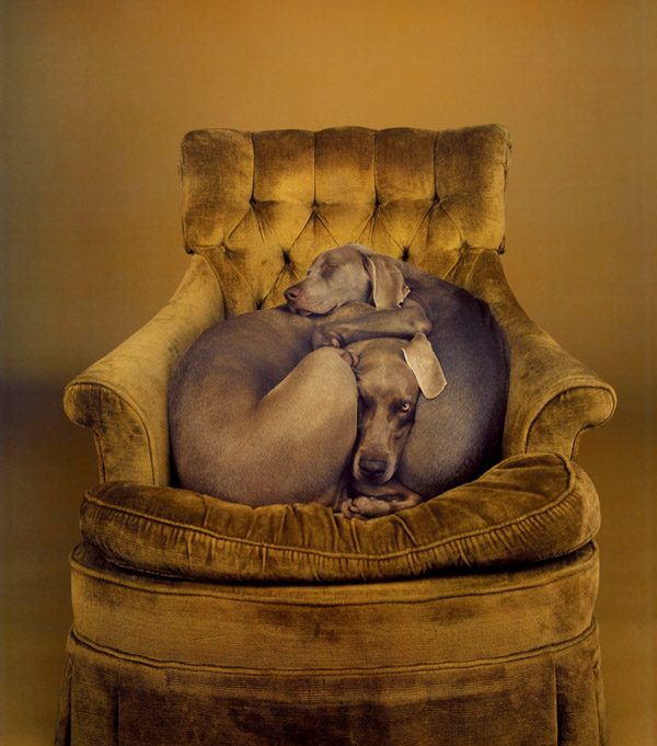 Nest_william_wegman