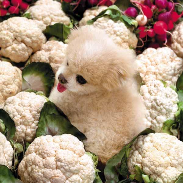 Mr_winkle_a_cauliflower
