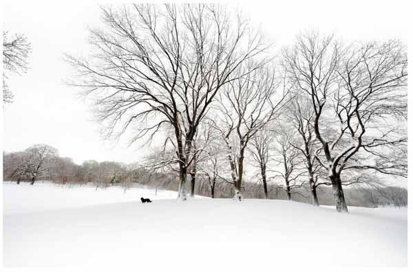 The-white-oaks-dog-photograph-joseph-o-holmes
