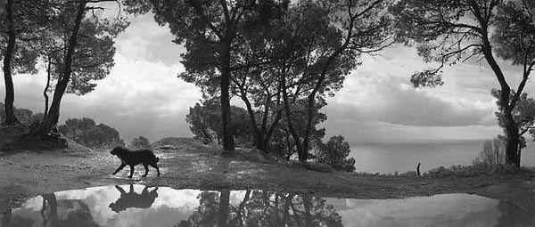 Pentti-sammallahti-Cilento_Italy_dog-reflection-1992
