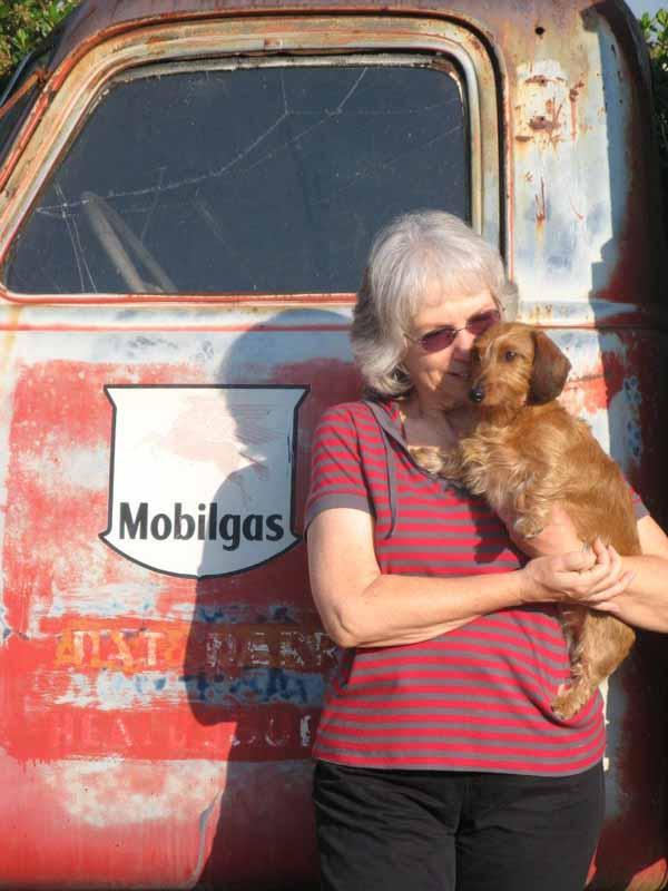 Susan-clute-longhaired-dachshund-roxie