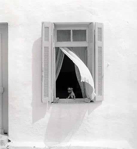 Pentti-sammallahti_hydra-greece-dog-in-window-1975
