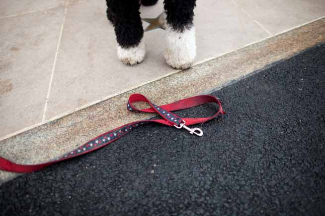 Bo-obama-with-leash
