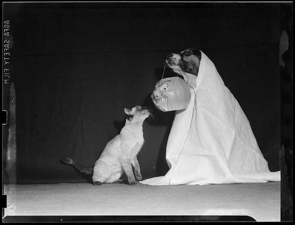 Vintage-photograph-halloween-dog-and-cat-leslie-jones-1940