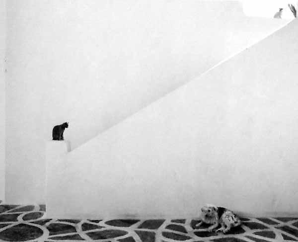 Pentti-sammallahti_untitled-dog-cats-2010