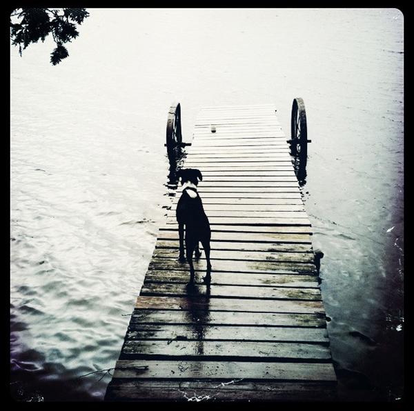 Lavender-Marsh_dog-cell-phone-photo
