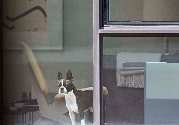 Arne-svenson-neighbours-dog