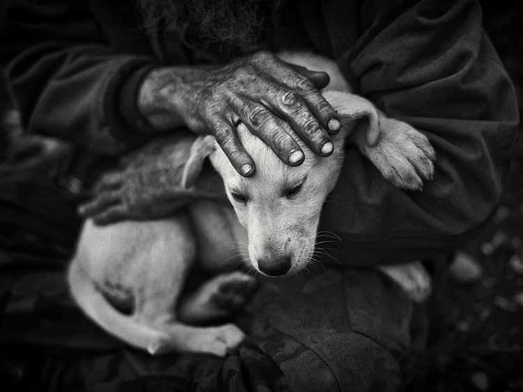Chris-Gibbs-hand-on-puppy