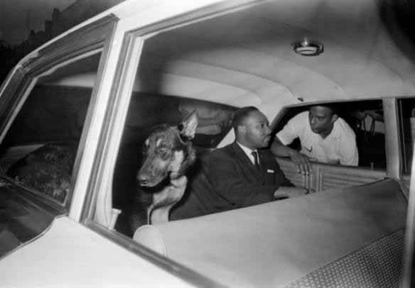 Martin-luther-king-jr-with-dog-speaking-to-andrew-young