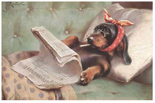 Dachshund-smoking-reading-newspaper-in-bed-c-reichert