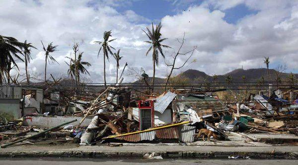 Dog-photograph-of-typhoon-haiyan-tacloban-by-reuters-bobby-yip-11-14-13