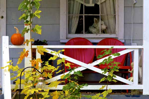 Dog-in-window-nevada-city-jim-pyle