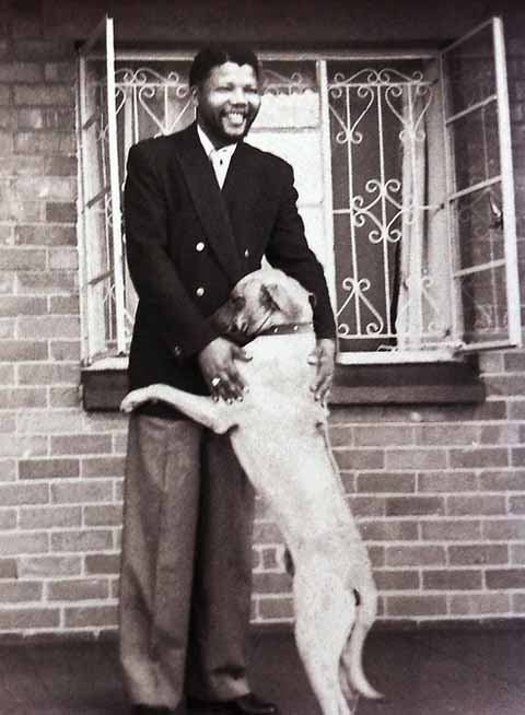 Nelson-mandela-and-dog-photograph-by-alf-kumalo