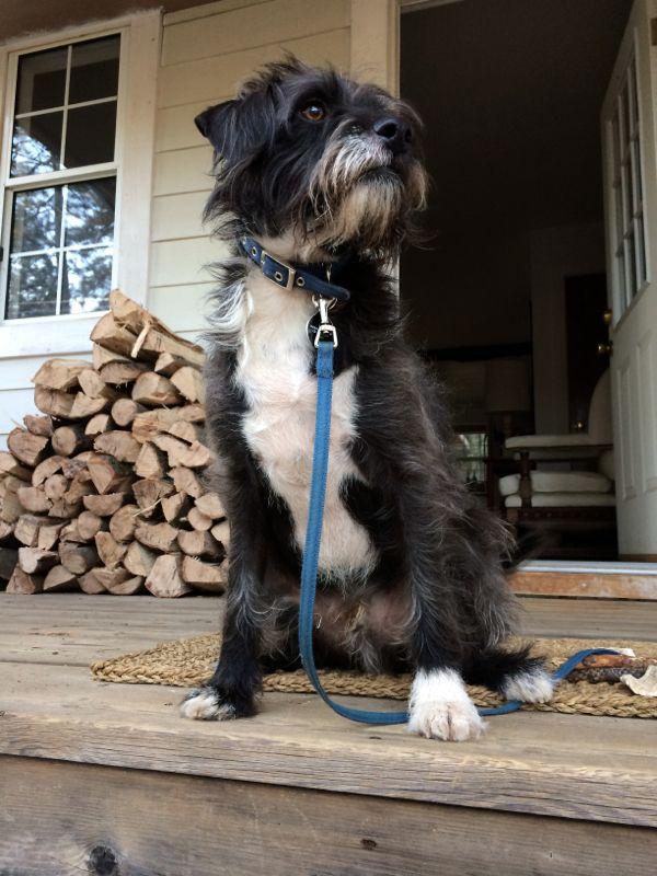 Tyler-Foote-Porch-Dog-2