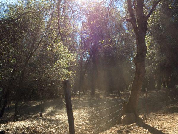 Penn-Valley-Firewood-fence