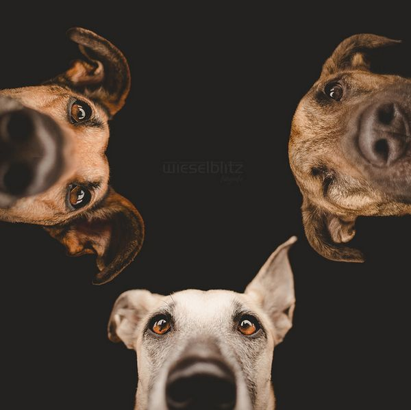 Dog-portrait-Elke-Vogelsang-19