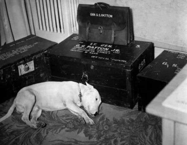 Photograph-George-S-Pattons-dog-willie-on-theday-of-his-death