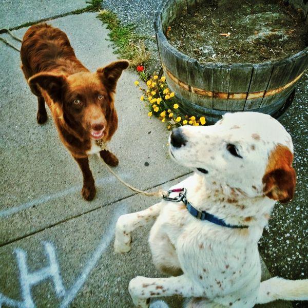 DANK-dogs-Moira-McLaughlin