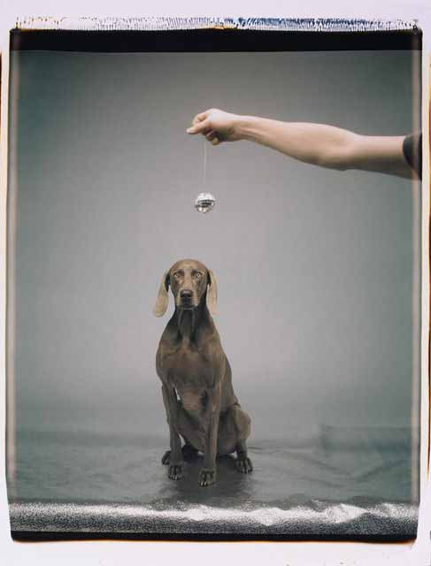 William-wegman-hypno-armory-show-via-artsy