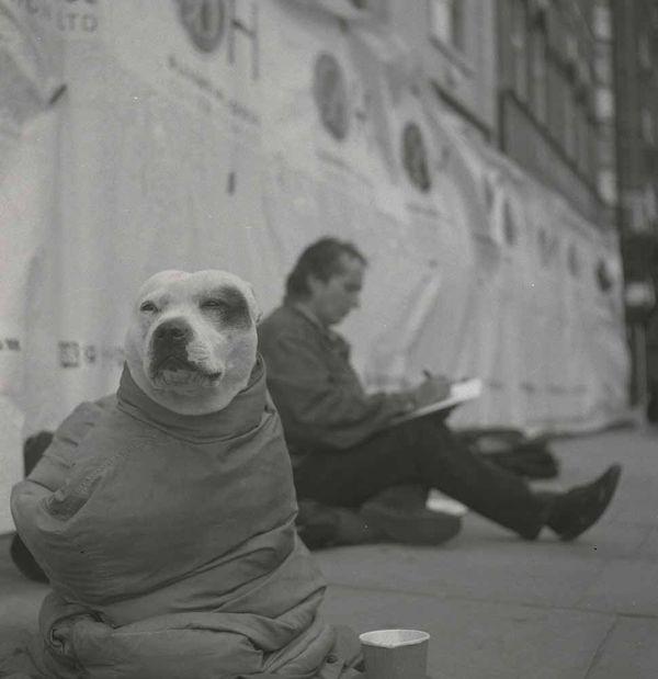 John-dolan-george-the-dog