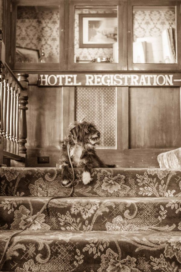 Tyler-foote-the-national-hotel-nevada-city-by-mara-casey-9-16-14-low-res