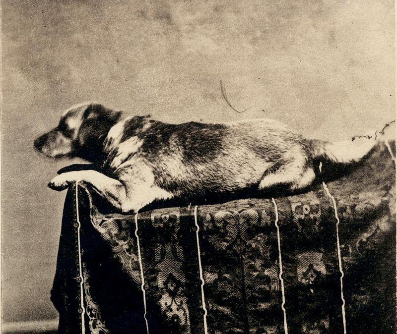 Abraham-lincolns-dog-fido
