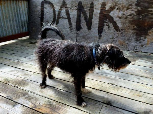 DANk-Tyler-Foote-Graffiti-Moira-McLaughlin-low-res