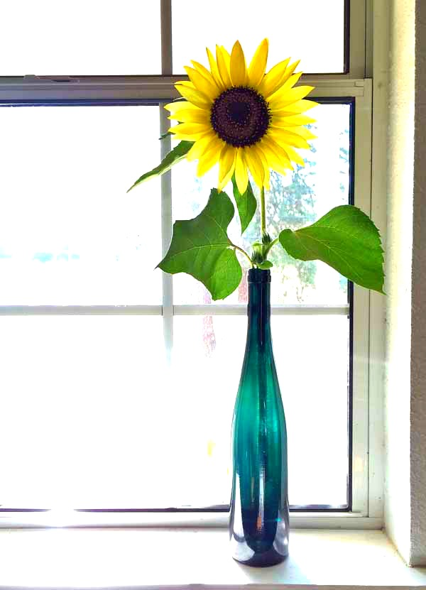 Sunflower-in-blue-vase-low-res-enhanced
