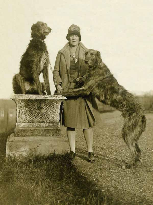 Vintage-photo-of-woman-with-two-scottish-deerhounds