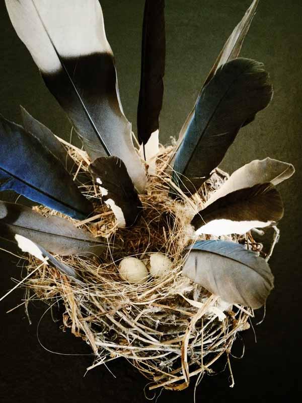 Dank-birds-nest-by-moira-mclaughlin-600