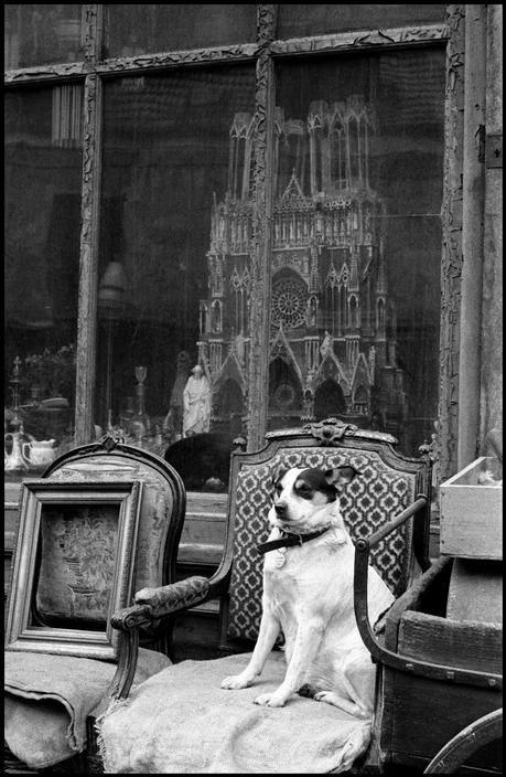 Notre-Dame-Cathedral-Dog-Inge-Morath-1958