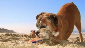 Diggingdog4