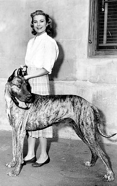 Grace_kelly_great_dane