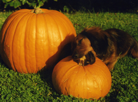 Darby_pumpkin_blog